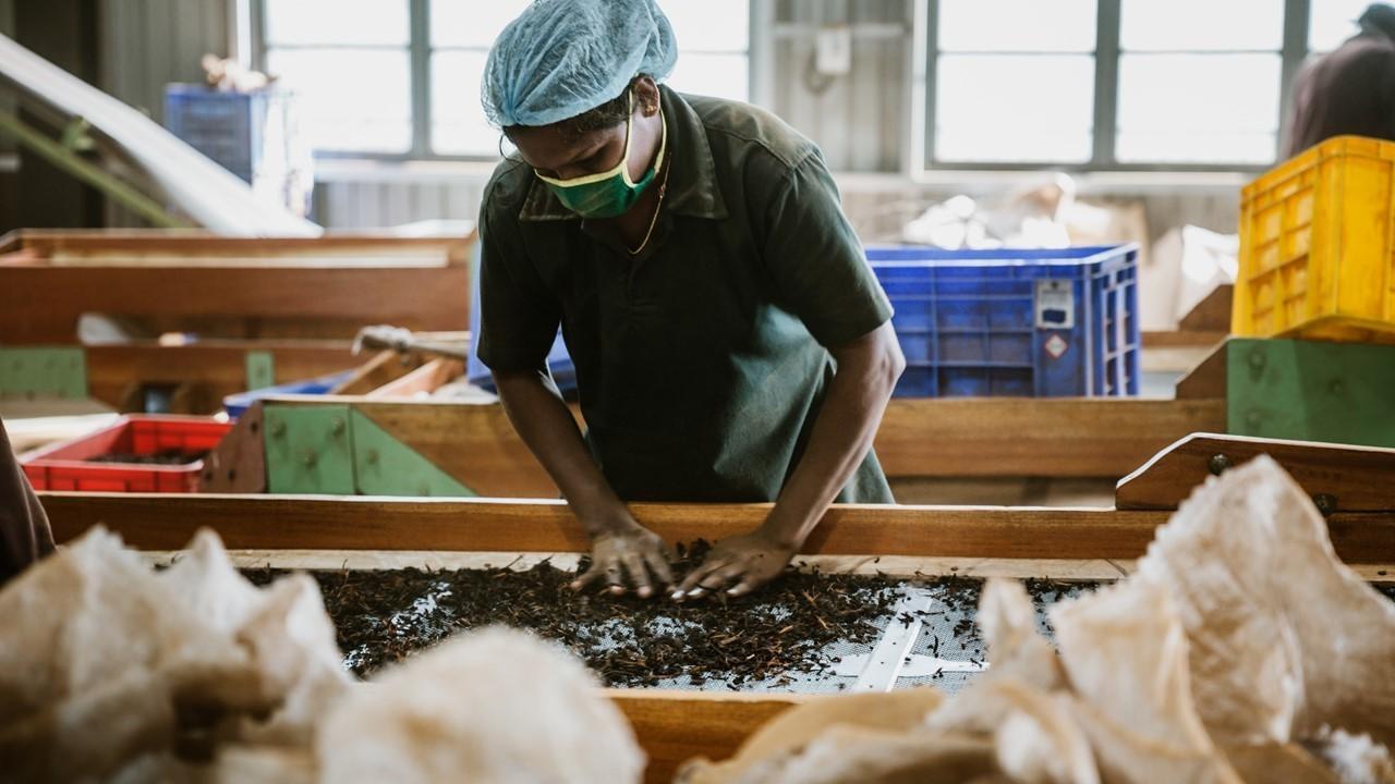 手搖茶葉飲料茶葉製作過程/ 茶不多先生商用飲料茶批發