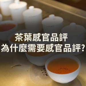 茶葉感官品評是什麼? 為什麼需要感官品評?